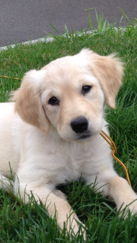Acquiring A Puppy | Greater Twin Cities